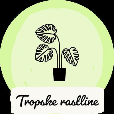Tropske rastline